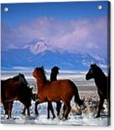 Valley Of The Wild Horses  Acrylic Print by Jeanne  Bencich-Nations