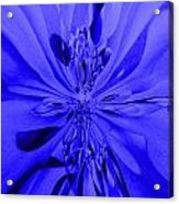 Values In Blue Acrylic Print