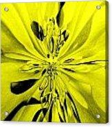 Values In Yellow Acrylic Print