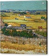 Van Gogh Wheatfield 1888 Acrylic Print