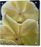 Vanilla Orchid Acrylic Print