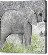 Vanishing Thunder Series-baby Elephant II  Acrylic Print
