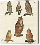 Various Kinds Of Owls Acrylic Print