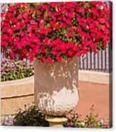 Vase Of Petunias Acrylic Print