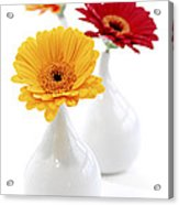 Vases With Gerbera Flowers Acrylic Print