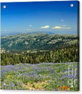 Vast View And Lupine Acrylic Print