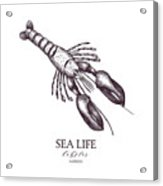 Vector Sea Life Illustration. Hand Acrylic Print