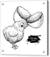 Vector Vintage Hand Drawn Chicken Baby Acrylic Print