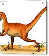 Velociraptor Acrylic Print