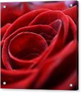 Velvet In Red Acrylic Print