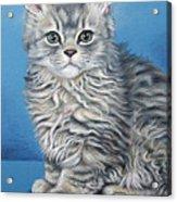 Velvet Kitten Acrylic Print