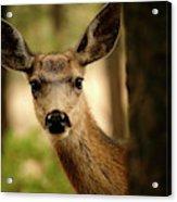 Venado Bura- Small Deer-bryce Canyon Acrylic Print
