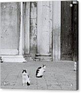 Cats Of Venice Acrylic Print
