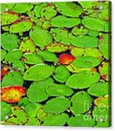Verdant Swamp Acrylic Print