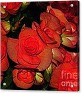 Vermillion Fire Acrylic Print