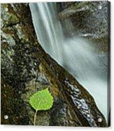 Vermont Aspen Leaf Waterfall Camels Hump Duxbury Acrylic Print