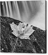 Vermont Autumn Maple Leaf Black And White Acrylic Print