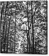 Vermont Forest Sunrise Ricker Pond Black And White Acrylic Print