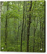 Vermont Mount Mansfield Green Forest Fog Panorama Acrylic Print