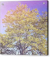 Vermont Tree Light Leak Sunflare  Acrylic Print