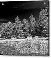 Vernon Lake Five Acrylic Print