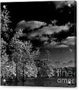 Vernon Lake Three Acrylic Print