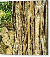 Vertical Vines Acrylic Print by Jess Kraft