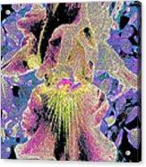 Very Fancy Lady Acrylic Print