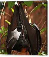 Very Fruity Bat Acrylic Print
