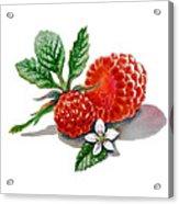 Artz Vitamins A Very Happy Raspberry Acrylic Print