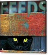 Very Supersticious  Acrylic Print