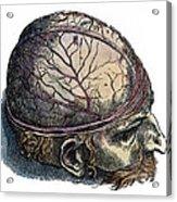 Vesalius: Cranium Acrylic Print
