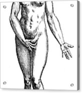 Vesalius: Female Nude Acrylic Print