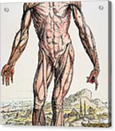 Vesalius: Muscles 01 Acrylic Print