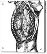 Vesalius: Thoracic Cavity Acrylic Print