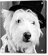 Veteran Vaudeville Stage Actor Acrylic Print