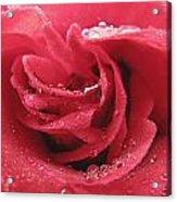 Veteran's Honor Rose Acrylic Print