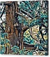 V.i. 0123 Acrylic Print