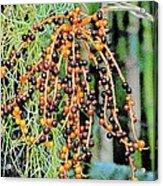 Vibrant Berries Acrylic Print