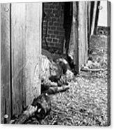 Victims Of The Gardelegen Massacre Acrylic Print