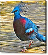 Victoria Crowned Pigeon In San Diego Zoo Safari In Escondido-california Acrylic Print