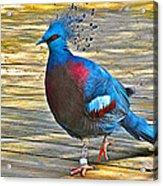 Victoria Crowned Pigeon In San Diego Zoo Safari In Escondido-california Acrylic Print