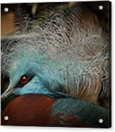 Victoria Crowned Pigeon In Tribal Decor Acrylic Print