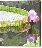 Victoria Lily Bloom 2 Acrylic Print