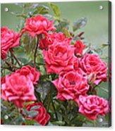 Victorian Rose Garden Acrylic Print