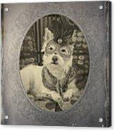 Victorian Westie Acrylic Print
