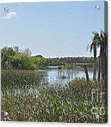 Viera Wetlands Acrylic Print