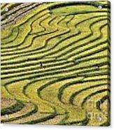 Vietnam Sapa Iv Acrylic Print