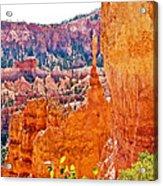 View At Beginning Of Navajo Trail In Bryce Canyon National Park-utah Acrylic Print