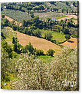 View At Montefalco Acrylic Print